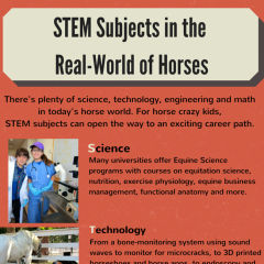 STEM and horses copy