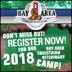 2018 Equine Vet Camp Registration Now Open!