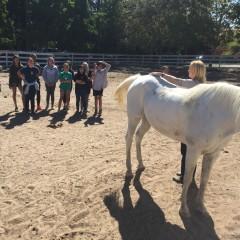 equine-rehab.com vet science lecture1